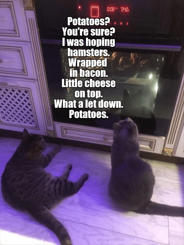 Cat - 000 240 Potatoes?. You're sure? I was hoping hamsters. Wrapped in bacon. Little cheese on top. What a let down Potatoes.