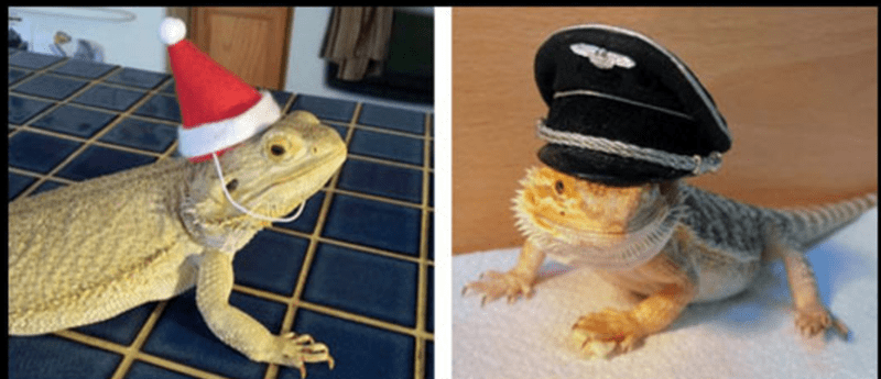 bearded dragon with top hat - Lizard