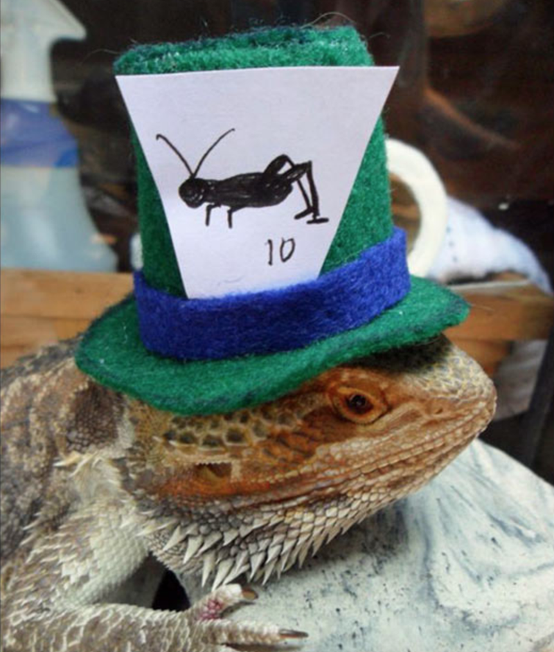 bearded dragon with top hat - Hat - 10