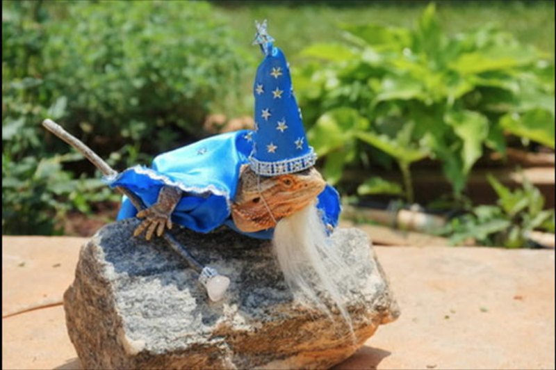 bearded dragon with top hat - Lawn ornament