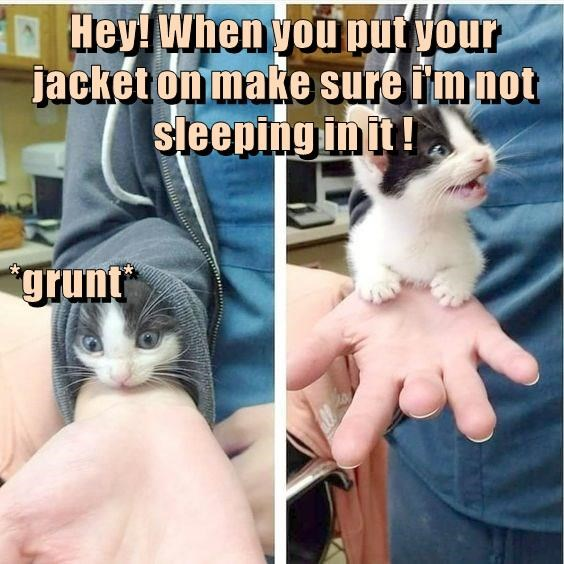 cat meme - Cat - Hey! Whenyou put your jacket on make sure i'mnot Steeping in it!