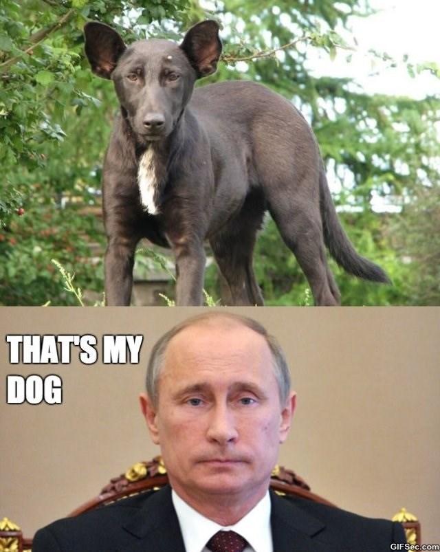 Dog - THAT'S MY DOG GIFSec.com