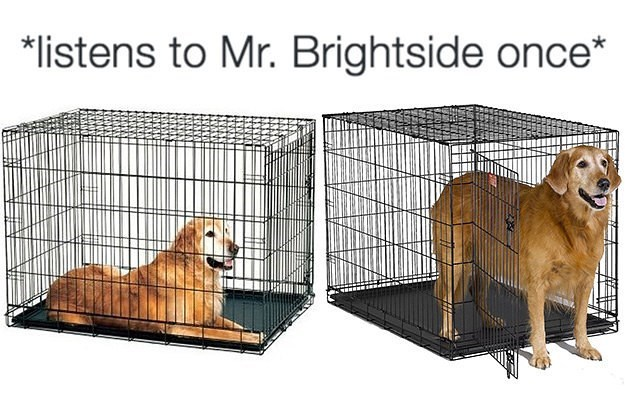 music meme - Cage - *listens to Mr. Brightside once*