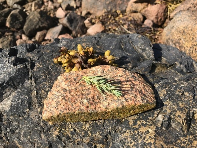 meme of a rock that looks like a salmon fillet