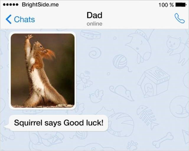 Adaptation - .BrightSide.me 100% Dad Chats online Squirrel says Good luck!