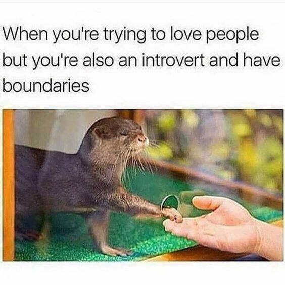 otter meme about meeting new people as an introvert