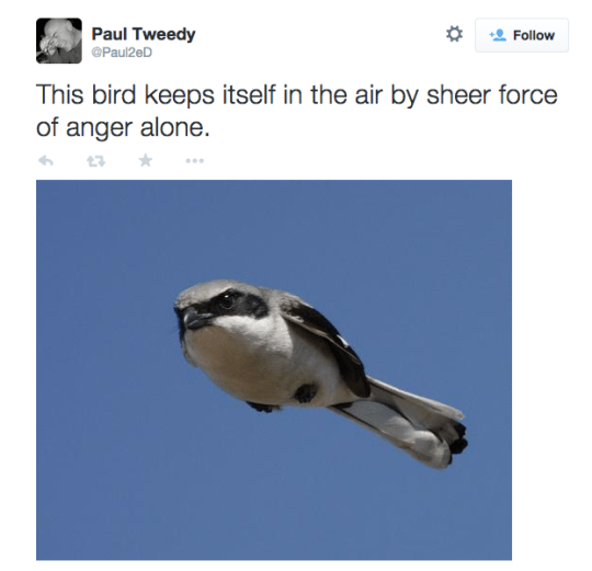meme tweet about bird flying with anger alone by: @Paul2eD