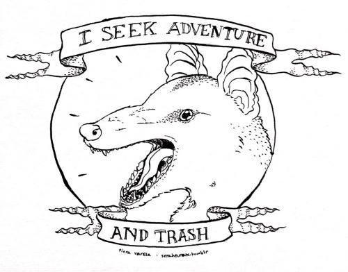 possum meme - Line art - I SEEK ADVENTURE AND TRASH er vereIA sereur bir