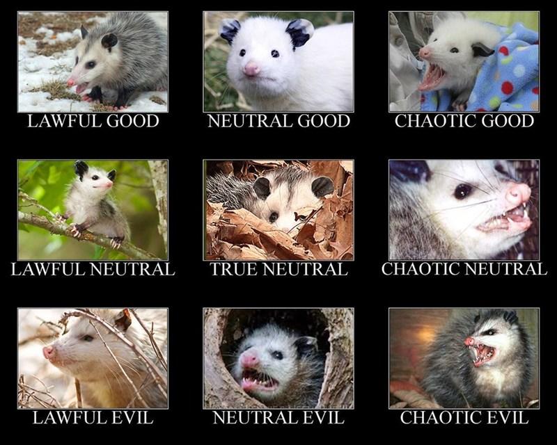 possum meme - Marsupial - LAWFUL GOOD NEUTRAL GOOD CHAOTIC GOOD CHAOTIC NEUTRAL LAWFUL NEUTRAL TRUE NEUTRAL LAWFUL EVIL NEUTRAL EVIL CHAOTIC EVIL