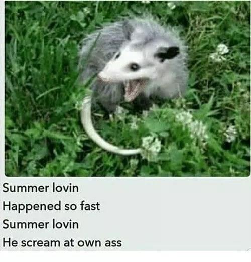 possum meme - Possum - Summer lovin Happened so fast Summer lovin He scream at own ass
