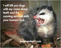 possum meme - Facial expression - I will kill you dogs with my razor sharp teeth and the Cunning survival skills your humans lack www.jenkehl.com