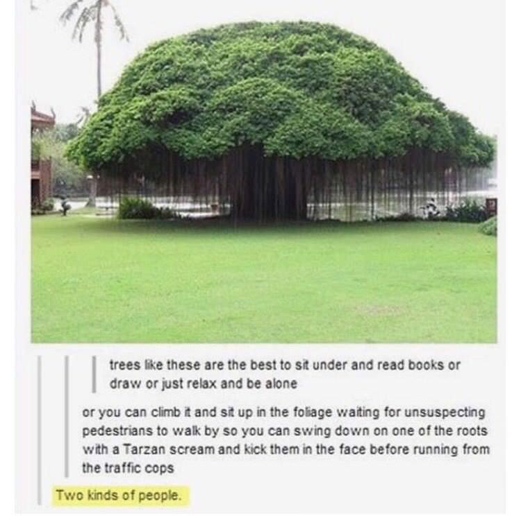 cool tree meme of two kinds of people