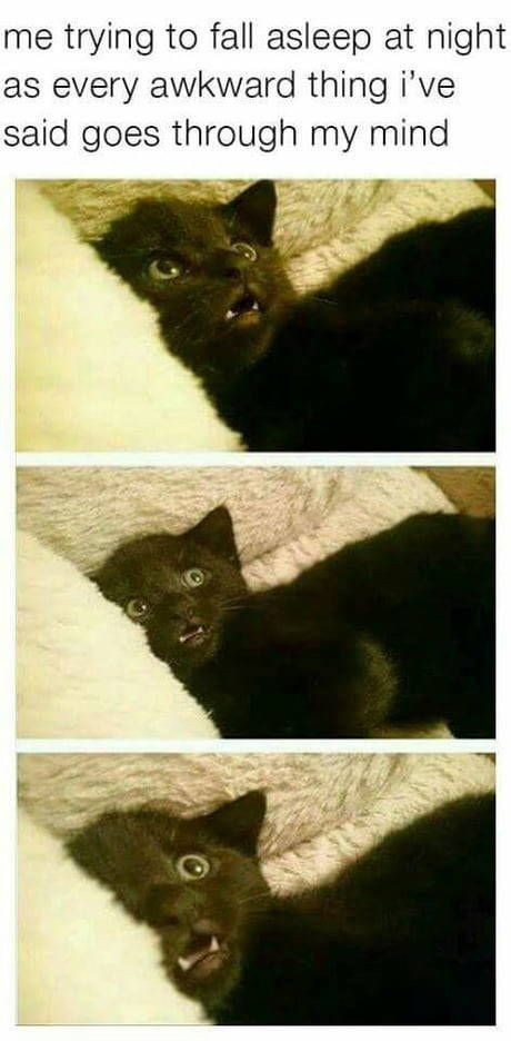 "Caption that reads, ""Me trying to fall asleep at night as every awkward thing I've said goes through my mind"" above pics of a cat looking distressed"