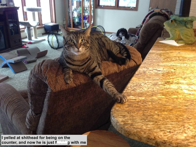 "Pic of a cat with one paw on the counter and a caption that reads, ""I yelled at shithead for being on the counter, and now he is just f*cking with me"""