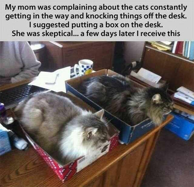Cat - My mom was complaining about the cats constantly getting in the way and knocking things off the desk. I suggested putting a box on the desk. She was skeptical... a few days later I receive this