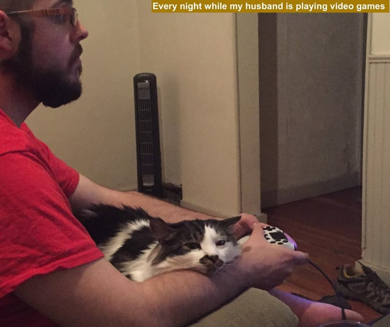 Cat - Every night while my husband is playing video games 1 111ED