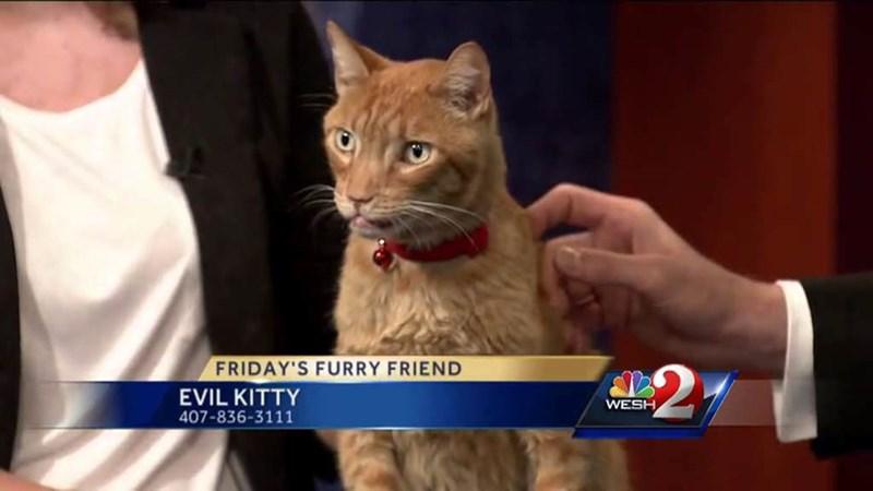 Mammal - FRIDAY'S FURRY FRIEND EVIL KITTY 407-836-3111 WESH