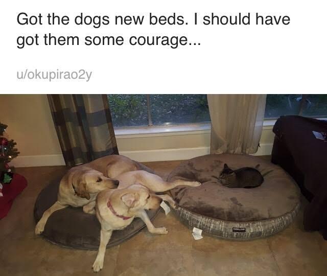 Dog breed - Got the dogs new beds. I should have got them some courage... u/okupirao2y