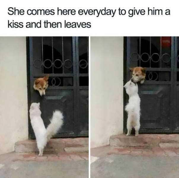 Canidae - She comes here everyday to give him a kiss and then leaves