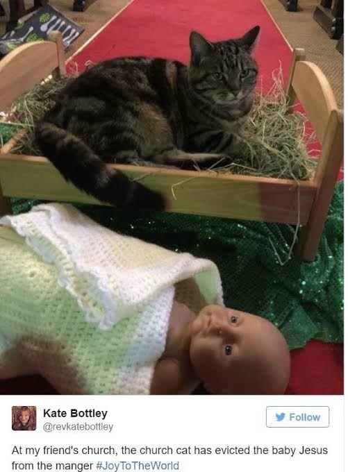 Cat - Kate Bottley @revkatebottley Follow At my friend's church, the church cat has evicted the baby Jesus from the manger #JoyToTheWorld