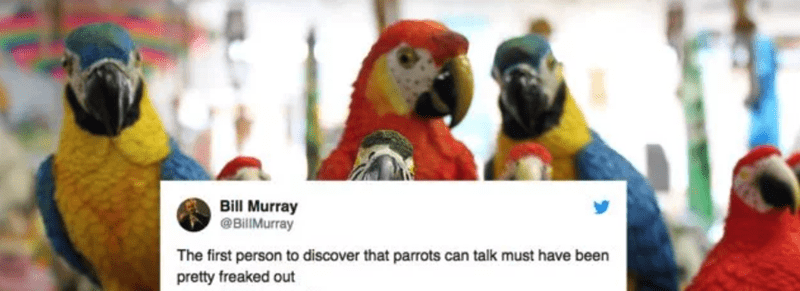 tweet by Bill Murray pointing out how freaked out the first person to hear a parrot must have been