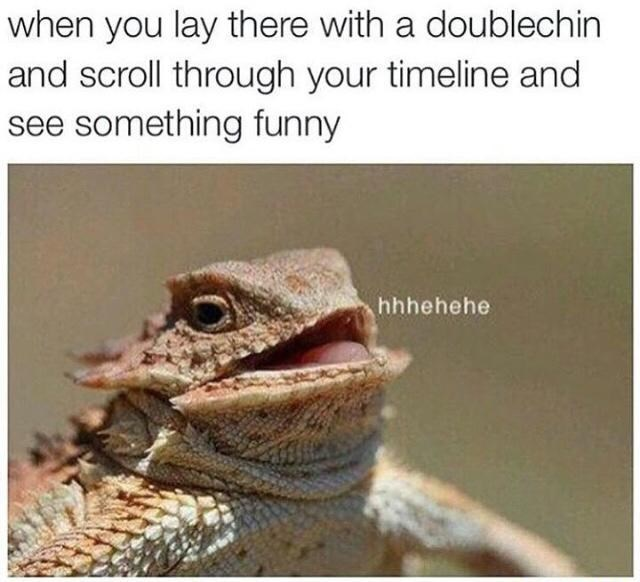 Sunday meme of a bearded dragon and having a double chin while you scroll through your feed