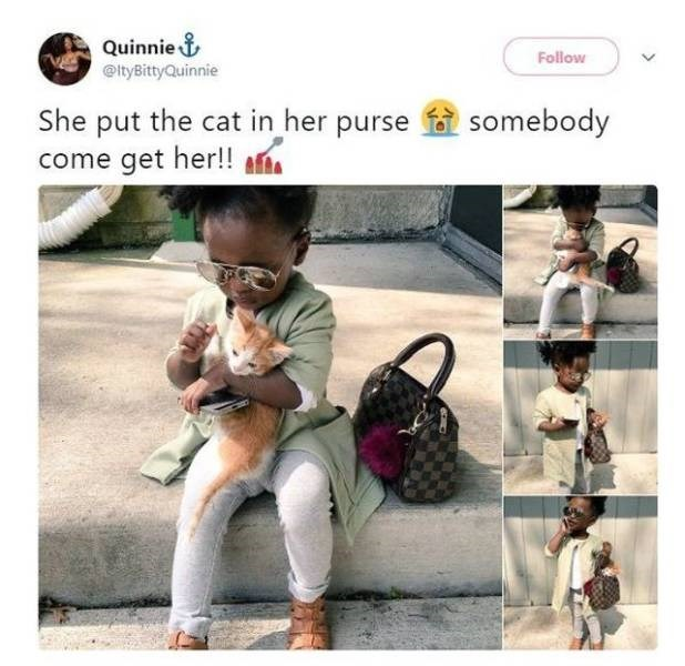wholesome meme - Product - Quinnie& @tyBittyQuinnie Follow She put the cat in her purse come get her!! somebody