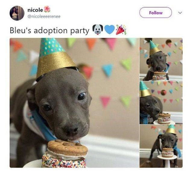 wholesome meme - Party hat - nicole Follow @nicoleeeerenee Bleu's adoption party