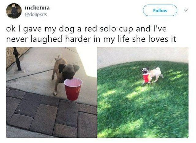 wholesome meme - Grass - mckenna Follow @dollpxrts ok I gave my dog a red solo cup and never laughed harder in my life she loves it