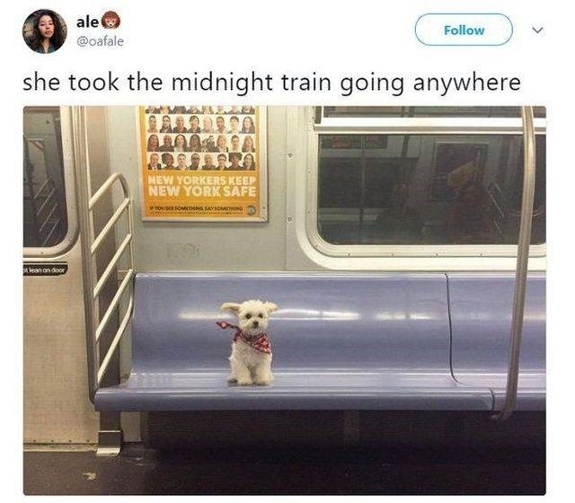 wholesome meme - Product - ale @oafale Follow she took the midnight train going anywhere NEW YORKERS KEEP NEW YORK SAFE wroUSE1OMuTHNG SAVSOMSTONG lean on door,