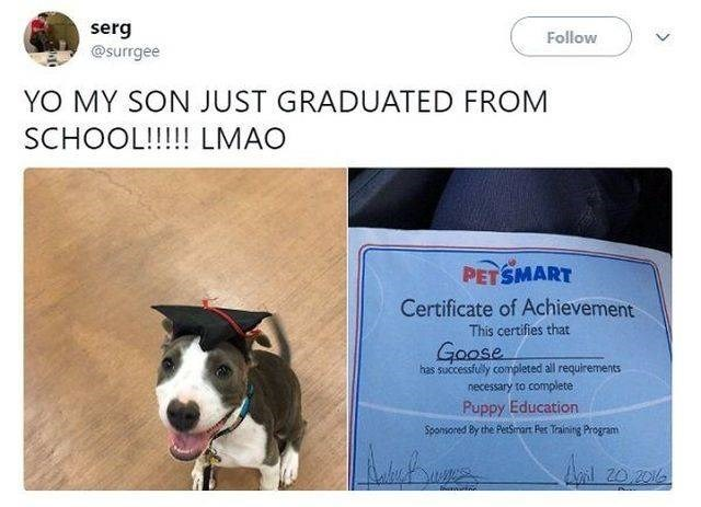 wholesome meme - Dog breed - serg @surrgee Follow YO MY SON JUST GRADUATED FROM SCHOOL!!!!! LMAO PETSMART Certificate of Achievement This certifies that Goose has successfuly completed all requirements necessary to complete Puppy Education Sponsored By the PerSmart Pes Trainitg Program Ail 20 2016 >