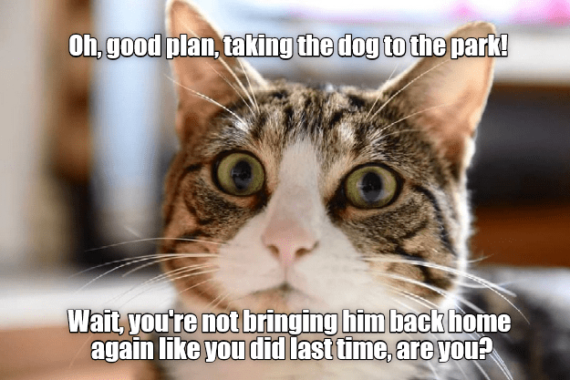 Your plan is flawed, human