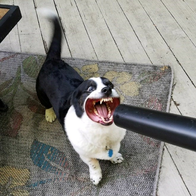 dog with a leaf blower