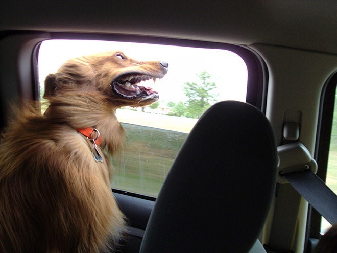 dog putting its head out of the window of a moving car