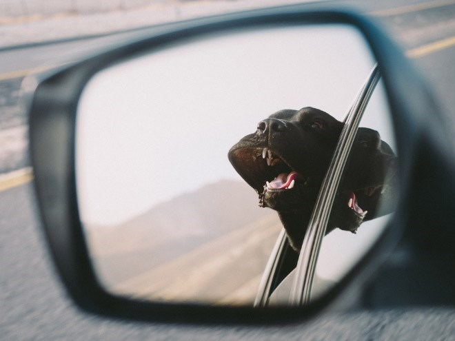 reflection of a dog with its head outside the car playing in the wind