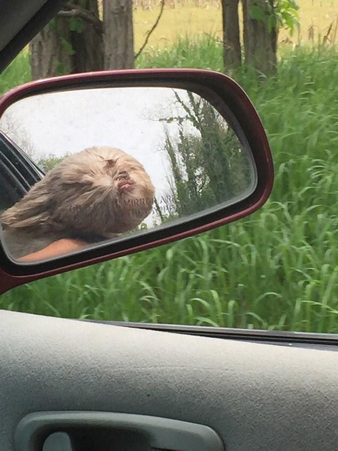 reflection of furry dog with its head out of the car window