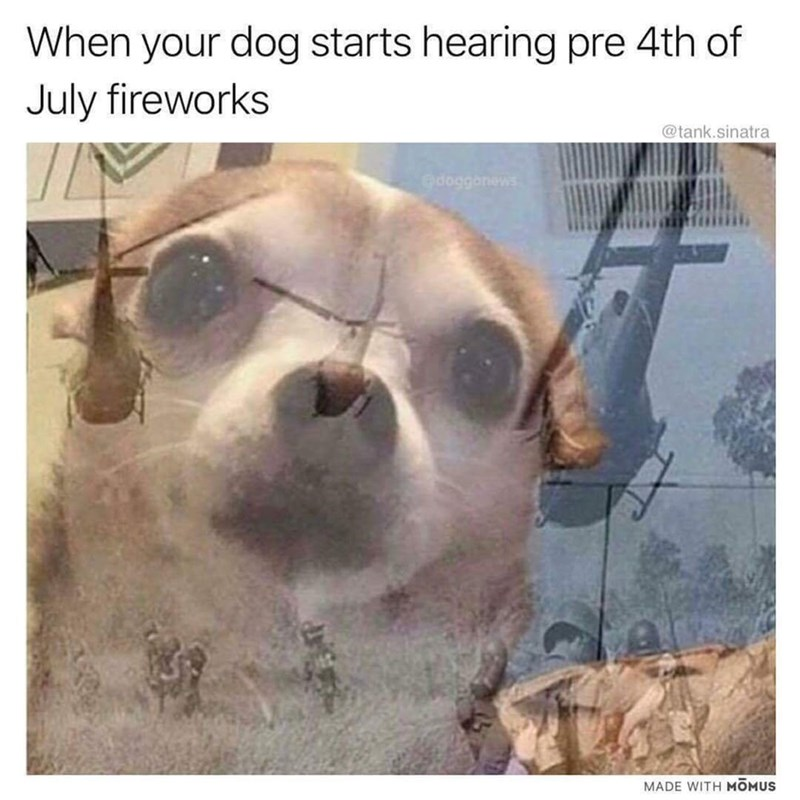 Dog - When your dog starts hearing pre 4th of July fireworks @tank.sinatra Gdoggonews MADE WITH MOMUS