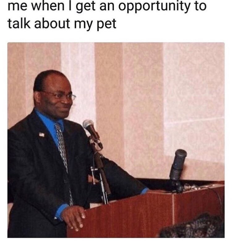 "Picture of a black guy looking enthusiastic about giving a speech under the caption, ""Me when I get an opportunity to talk about my pet"""