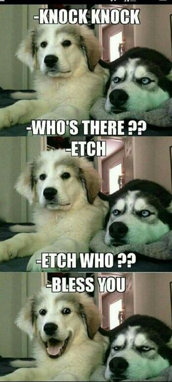 Dog - -KNOCK KNOCK WHO'S THERE? ETCH ETCH WHO P? BLESS YOU