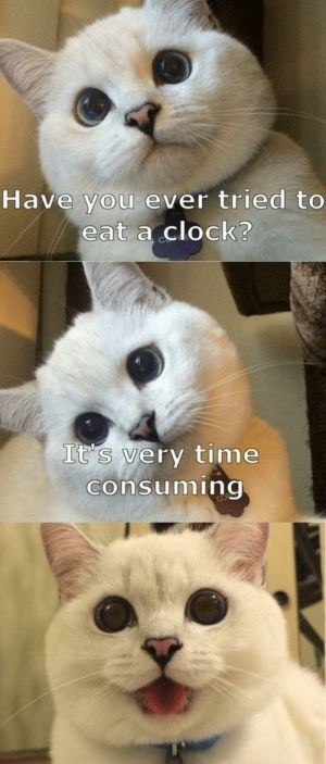 Cat - Have you ever tried to eat a clock? It's very time consuming