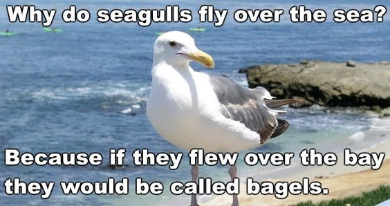 Bird - Why do seagulls fly over the sea? Because if they flew over the bay they would be called bagels