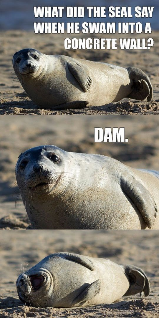 Seal - WHAT DID THE SEAL SAY WHEN HE SWAM INTO A CONCRETE WALL? DAM.