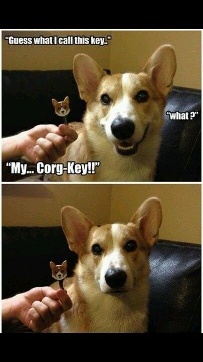 """Dog - """"Guess what I call this key. Swhat? """"My... Corg-Key!r"""