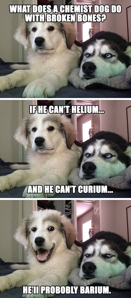 Mammal - WHAT DOES A CHEMIST DOG DO WITH BROKEN BONES? IFHE CANT HELIUM AND HE CANT CURIUM... HED PROBOBLY BARIUM