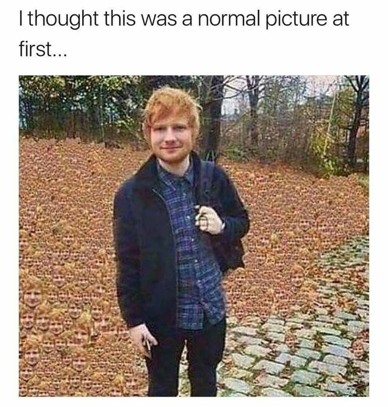 ed sheeran meme - Text - Ithought this was a normal picture at first...