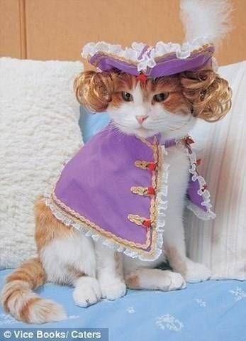Cat - Vice Books/ Caters