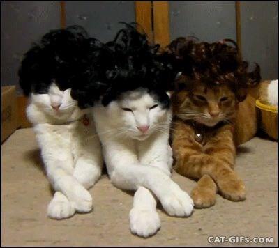 Cat - CAT-GIFS.COM