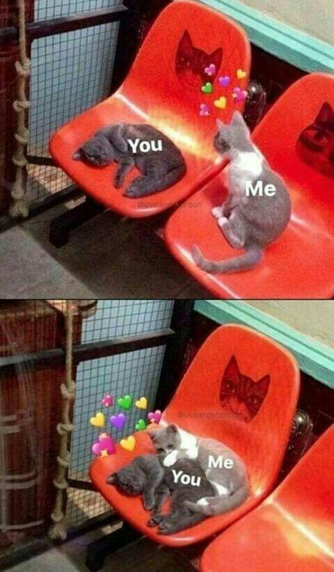 meme with pics of cat joining another cat in a chair and snuggling together