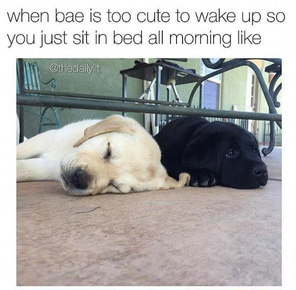 meme about not wanting to wake your loved one with pic of puppy laying awake next to a different sleeping puppy