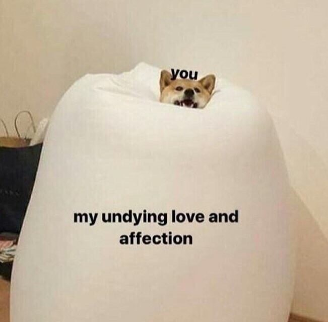 meme about drowning someone in your love with pic of Shiba Inu dog inside a giant pillow